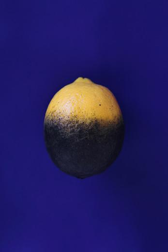 Fanaa-tattooed-lemon-2015-copy